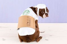 How to Dress Your Dog like a Latte for Halloween | Brit + Co