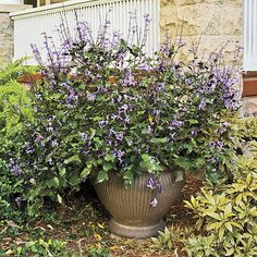 'Mona Lavender' | Enjoy nonstop color all season long with these container gardening ideas and plant suggestions. You'll find beautiful pots to adorn porches and patios. You may not have the space or patience to become a master gardener, but anyone can master container gardening. It's a cinch—all you need is a container (a planter in true gardener speak), potting soil, some plants and you're ready to go. Thinking of container gardening like this, it's easy to see why container gardening…