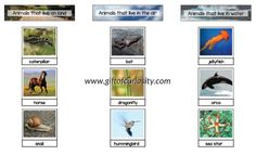 Printable set of Montessori land, air, and water animals sorting cards. Great for early geography lessons focused on air, land, and water.    Gift of Curiosity