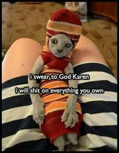 The reason why cats turn evil. Memes Humor, Funny Animal Memes, Funny Animal Pictures, Cute Funny Animals, Funny Cute, Funny Dogs, Funny Memes, Hilarious, Funniest Memes