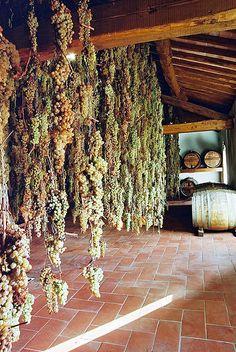 Malvasia e Trebbiano per la produzione del vinsanto. www.brickscape.it #brickscape #turismoesperienziale