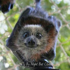 Help build our baby bat nursery! by Tamsyn Hogarth - GoFundMe