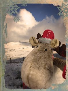 Our office reindeer couldn't resist a trip up into the hills to see the snow!