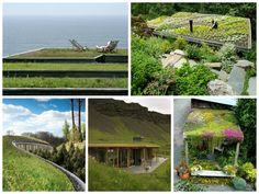 Sabe quais são as vantagens e desvantagens de um telhado verde?