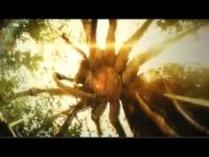Giant spider and Giant Octopus vs King Kong \ Kong Skull Island 2017