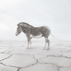 Each animal montage by Alice Zilberberg emphasizes the power and importance of meditative art.