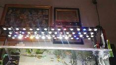 DIY ELECTRONICS PROJECTS: DIY Led Aquarium Aquarium Lamp, Aquarium Lighting, Diy Electronics, Electronics Projects, Led Diy, Fish Tank, Led Lamp, Blogger Templates, Diy Projects