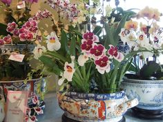 The French Tangerine: ~ ginny's orchids Fresh Flowers, Beautiful Flowers, Orchid Arrangements, Orchids Garden, Garden Pots, Houseplants, Container Gardening, Flower Power, Planting Flowers