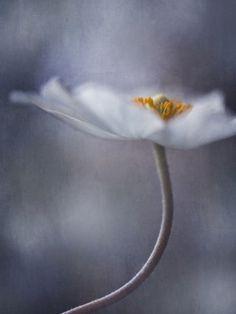 the beauty within by Priska Wettstein