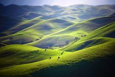 """Cattle On A Thousand Hills"" by Todd Arbini https://gurushots.com/toddarbini/photos?tc=2f714573798c4445d3810149174a9e47"