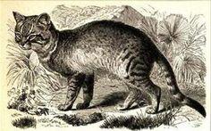 Katzen sind temperamentvolle Tiere und gelten als unabhängig und eigensinnig. Diese Eigenschaften kommen nicht von ungefähr, sondern finden ihre Begründung in der Historie. Und wie wurde die Katze zur Hauskatze? Hier ein interessanter Beitrag zu der Geschichte der Katze.  http://blog.schnuff-und-co.de/index.php/die-geschichte-der-hauskatze-wie-die-katze-zum-haustier-wurde/