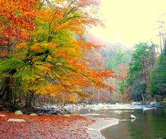 Beautiful Fall Foliage Around the World: Knoxville, TN