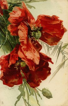by Catherine Klein) Catherine Klein, Pictures Of Poppy Flowers, China Painting, Red Poppies, Sunflowers, Botanical Art, Vintage Flowers, Vintage Postcards, Vintage Art