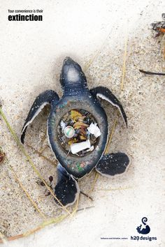 we need to solve the problem of marine pollution Learning how to reduce plastic pollution is a necessary step to a healthier earth follow these steps to do your part in keeping our earth a cleaner place  you can help keep marine life from .
