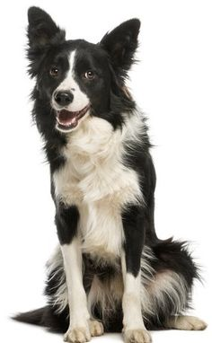 30 Breeds That Are Good House Dogs - Perfect for Families!