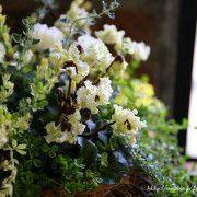 フローラのガーデニング・園芸作業日記の画像