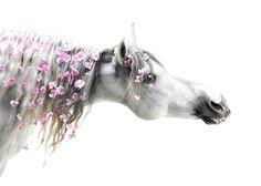 Horse Flower crown mane pink color splash ❀Flowers in their coats❀Laerta on Fivehundredpx horsephotography.ru