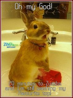 Funny Animal Pictures - View our collection of cute and funny pet videos and pics. New funny animal pictures and videos submitted daily. Cute Funny Animals, Cute Baby Animals, Funny Cute, Animals And Pets, Crazy Animals, Funny Bunnies, Hilarious, Bunny Meme, Animal Pictures