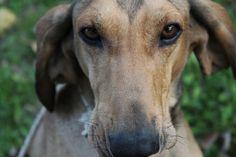 A me gli occhi... Bisquitte cerca casa: info: adozioni@leudica.org