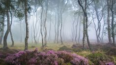Stanton Moor – UK