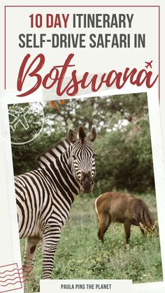 Botswna is an incredible destination. Check this very complete Botswana itinerary from Chobe to Okavango Delta, with all the information you need to plan a road trip in Botswana and go on all best Botswana safaris. Includes incredible Botswana photography to ilustrate and tips to your trip to Botswana - Botswana destination | Botswana travel | Botswna travel guide | Botswana travel | Botswana Itinerary Africa Destinations, Travel Destinations, Chobe National Park, Self Driving, Travel Themes, Best Places To Travel, Travel Guides, Travel Tips, Africa Travel