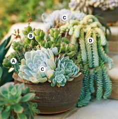 Layered Garden Succulents In Containers, Cacti And Succulents, Container Plants, Planting Succulents, Container Gardening, Planting Flowers, Container Flowers, Succulent Gardening, Garden Plants