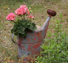 Geraniums in an old watering can, very Cottage pretty Garden Junk, Garden Planters, Garden Art, Garden Design, Balcony Garden, Rustic Gardens, Dream Garden, Garden Inspiration, Container Gardening