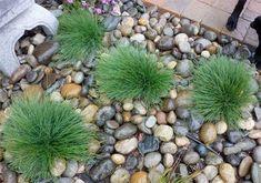 San Francisco Landscaping Plants Directory Landscaping Plants, Garden Plants, Blue Fescue, Growing Veggies, Plant Pictures, Yard Design, Cool Plants, Native Plants, Beautiful Landscapes
