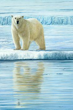 curious bear svalbard by Jeremy Paul