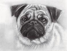 Pug Drawing Giclee Art Print Animal Portrait Pet by OlechkaDesign