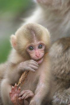 Baby Torako - monkey see, monkey do