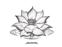 Bilde fra http://whatcomflowers.net/wp-content/uploads/2014/11/Lotus-Flower-Tattoo-Design-Ideas.jpg.
