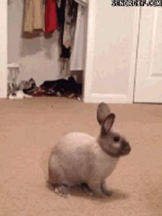 When you're singing super loud in your apartment and then roommate gets home early. | 21 Bunny Reactions For Everyday Situations