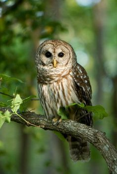 Owls are adorable. End of story. :)