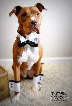 Una imagen vale más que mil palabras, esto explica por qué tu perro debe estar en tu boda ⋮ Es la moda