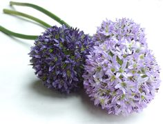 Allium Silk Flower.