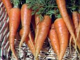 Step by Step How to Grow Carrots