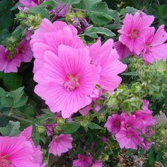 1000 images about jardin rose on pinterest pink garden pink flowers and roses. Black Bedroom Furniture Sets. Home Design Ideas