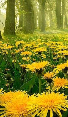 Summer nature photography flowers Ideas for 2019 Nature Photography Flowers, Spring Photography, Landscape Photography, Photography Poses, Gardening Photography, Amazing Flowers, Landscape Photos, Amazing Nature, Beautiful Landscapes