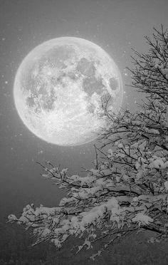 Snowy Night Super Moon