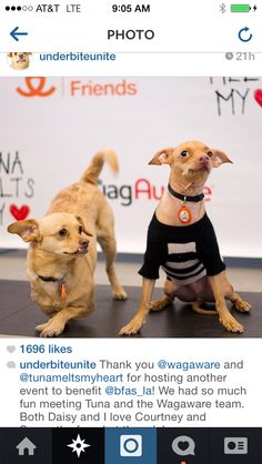 Mega Instagram Stars and WagAware Ambassadors Daisy the Underbite out of her wheelchair and Tuna!