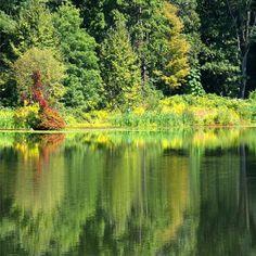 Swan Lake Blue Reflection