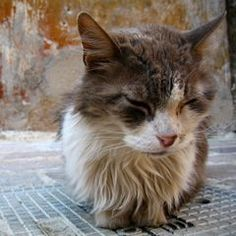 Best Products For Senior Cats With Arthritis