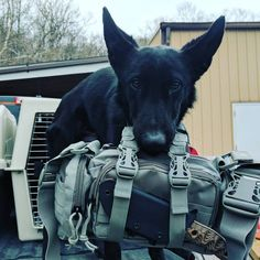 Man's Best Friends, a K9 and a Rapid Deployment Pack by 3V Gear