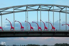 Giraffes on the Wilhelminabridge. Deventer on stilts festival 2012.