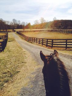 equestrian images, image search, & inspiration to browse every day. Horse Ears, Future Farms, Horse Stables, Dream Stables, All About Horses, Summer Memories, Happy Trails, Animal Wallpaper, Horse Photography
