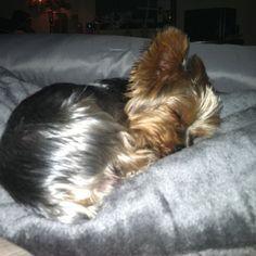 Sleepy puppy, my fur baby sleeps just like this