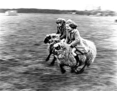 Girls riding on sheep - John Drysdale Prints - Easyart.com