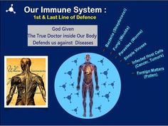 The Importance Of A Healthy Balanced Immune System. God has given The Best Doctor inside our Body.  Can we imagine life with a week Immune system ?  http://4lifeindia.weebly.com/blog/the-importance-of-a-healthy-balanced-immune-system