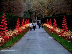 Longwood Christmas http://ourfairfieldhomeandgarden.com/a-longwood-christmas-evening-stroll/